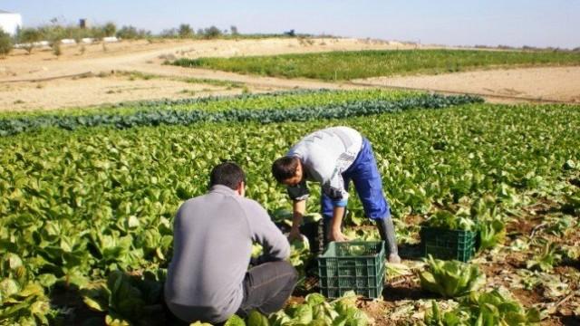 La Junta abre una nueva convocatoria de ayudas a jóvenes agricultores y ganaderos con un presupuesto de 30 millones