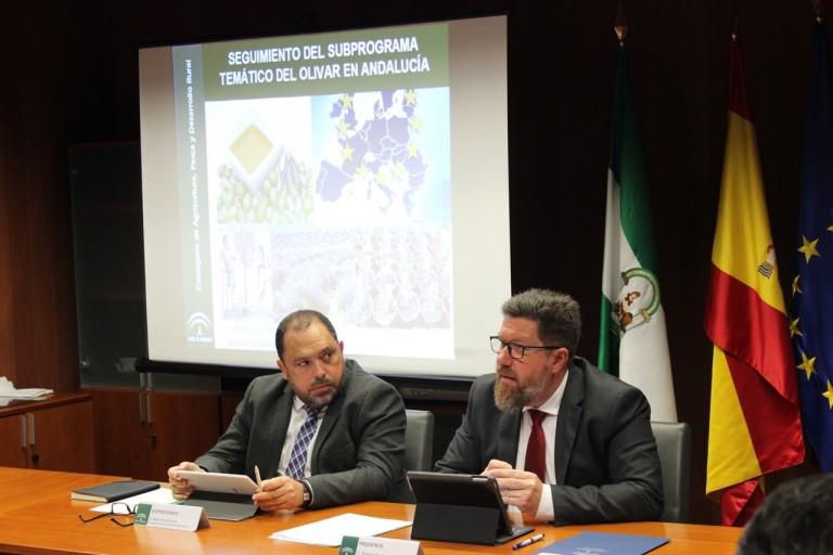 AGRI_Consejo Andaluz Olivar_15-1