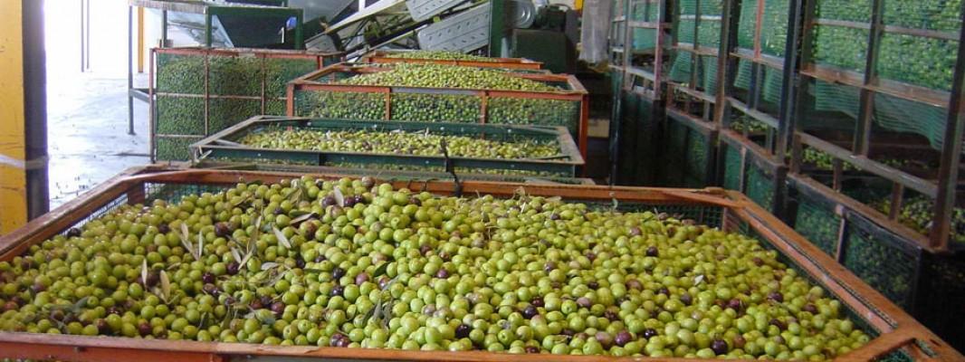 Nuevas ayudas por valor de 68,6 millones de euros dirigidos a pymes, grandes empresas y al sector del olivar
