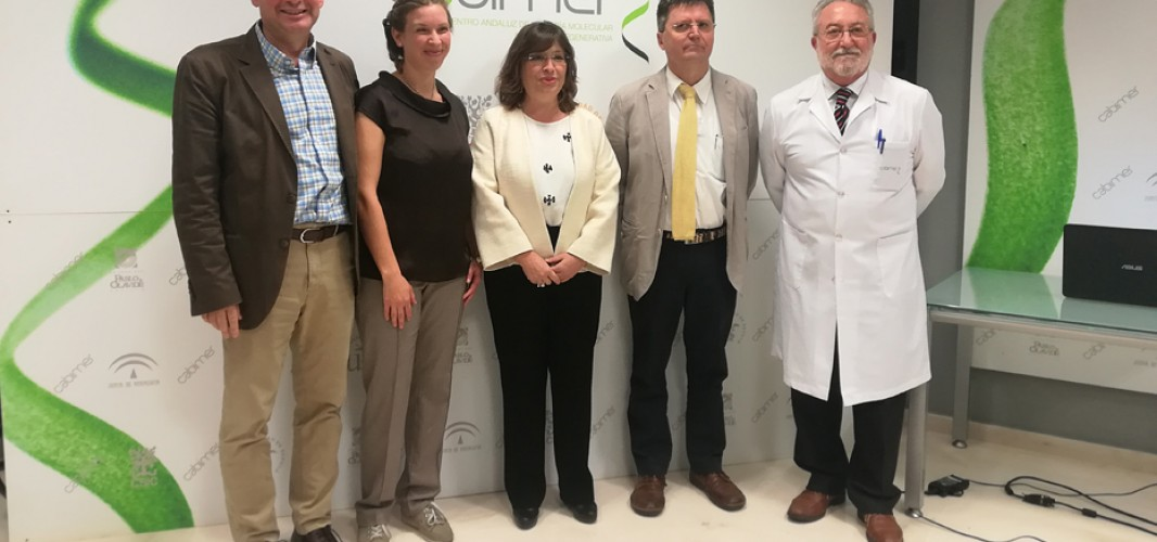 Investigadores de la sanidad pública andaluza hallan potencial terapéutico para la diabetes tipo 1