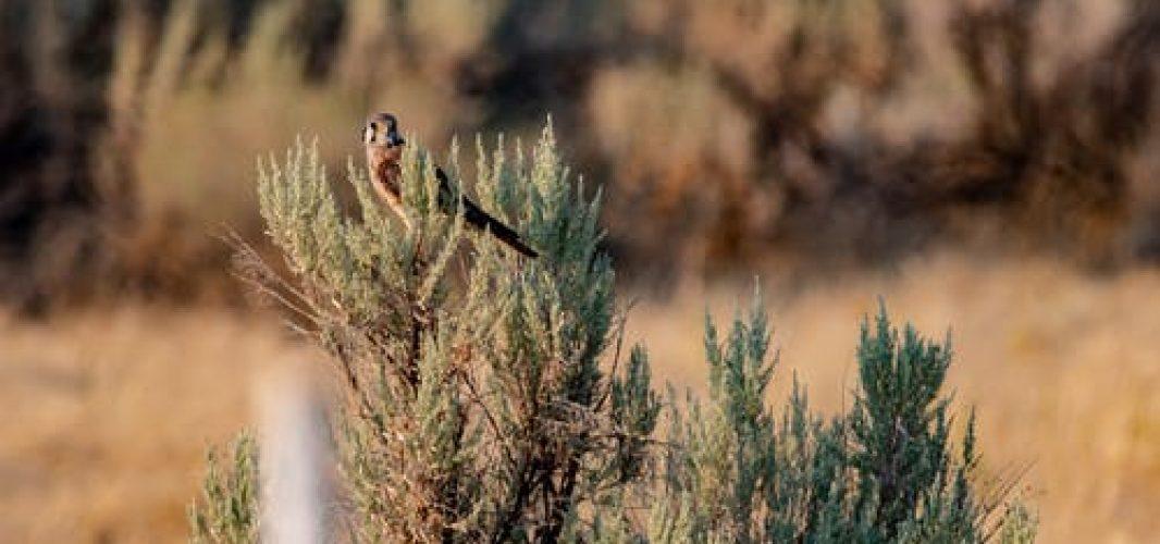 Medio Ambiente instala 11 cajas nido para favorecer la llegada del cernícalo primilla a nuestro municipio