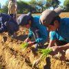 El Parlamento andaluz presta su ayuda para la mejora de la alimentación y salud de la niñez boliviana afectada por la Covid-19