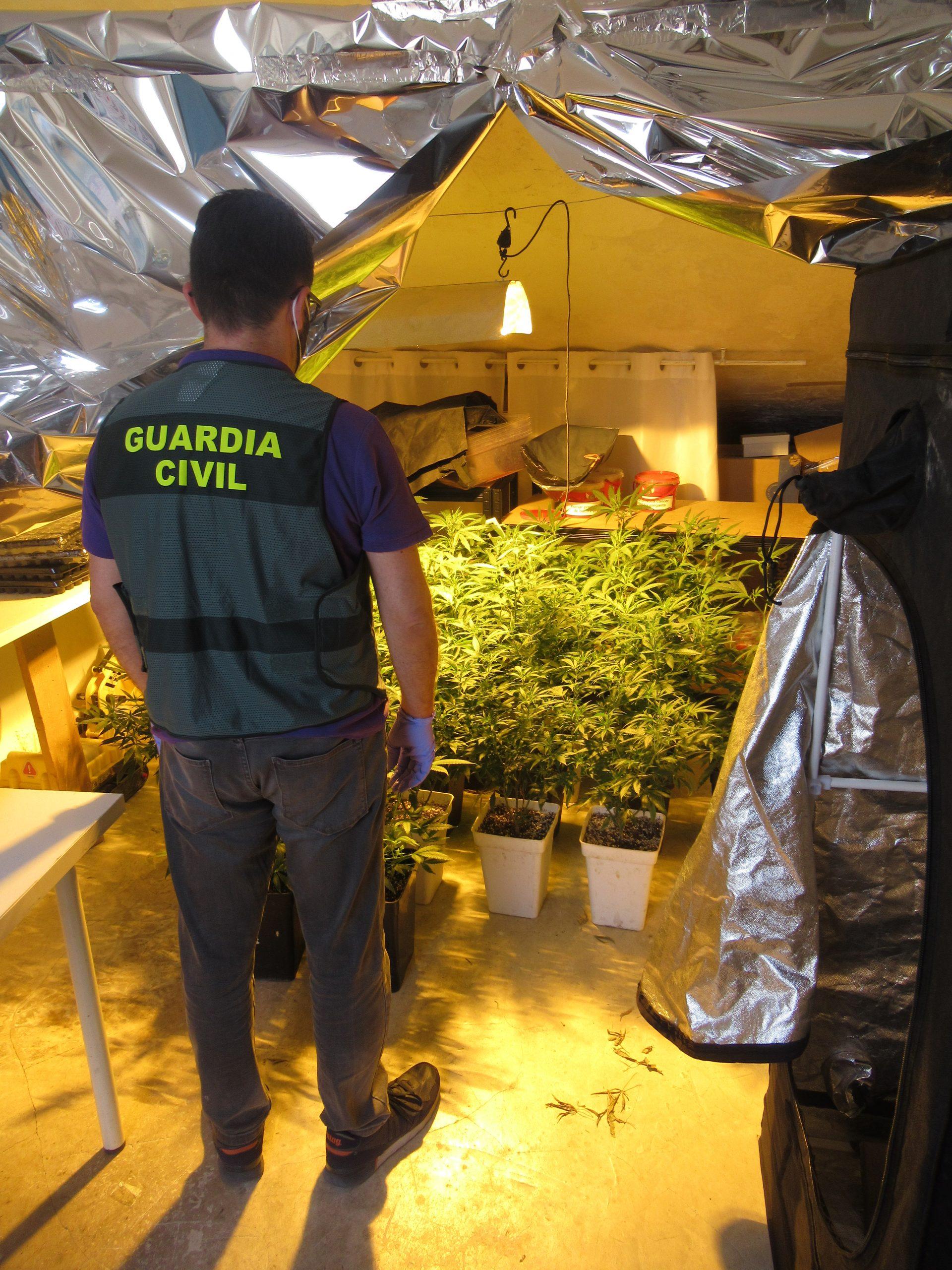 La Guardia Civil desmantela una plantación de marihuana en Montilla y detiene a dos personas